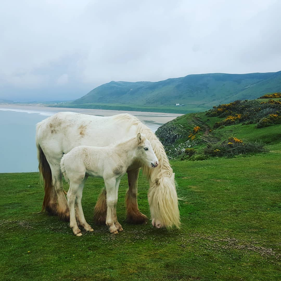Ponies on the cliff